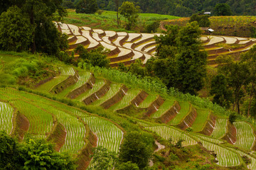 Amazing and beautiful terraced paddy field during raining season in chiang mai, Thailand, wonder of the world, wonder of nature