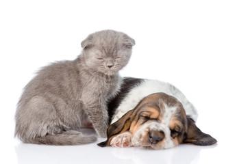 sleepy kitten sitting with sleeping basset hound puppy. isolated on white