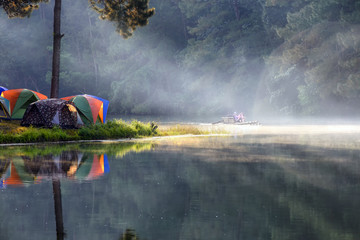 Camping and tent under the pine forest in at Pang-ung, pine forest park , Mae Hong Son, North of Thailand