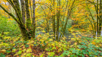 Tree trunks covered with moss in the autumn forest. The bright colors of autumn. Amazing fall.