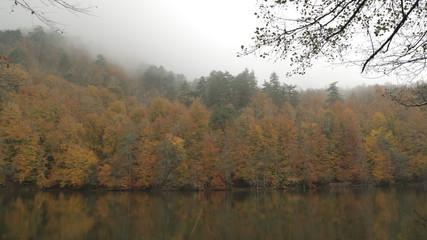 Göl kenarındaki mükemmel orman