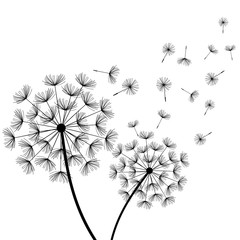 White background with two stylized black dandelions