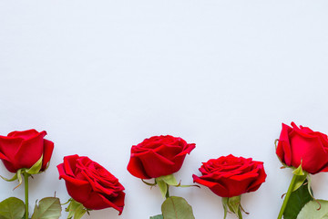 red roses on a white background for Valentine's day