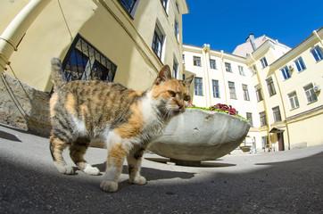 Cat in courtyards ordinary St. Petersburg