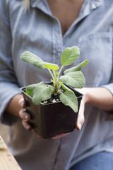 Woman holding sage plant
