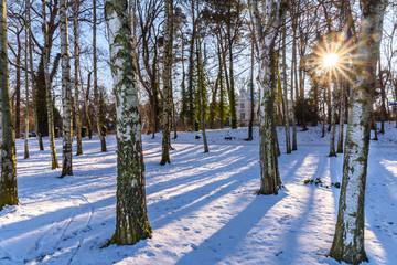 Birkenwald - Winterlandschaft mit Sonne in Dresden