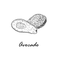 Hand drawn black vector illustration of avocado isolated on white
