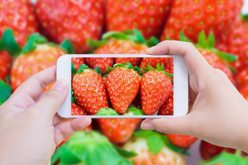 taking photo of fresh strawberry