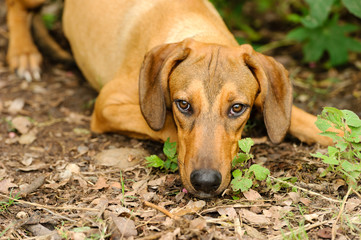 Sad Dog Shy Face Closeup
