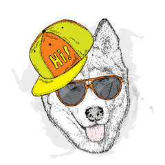 Dog in cap and glasses. Vector illustration. Cute Husky.