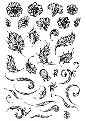 Vector set of floral elements.