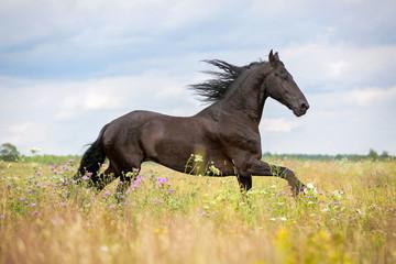 Running horse.