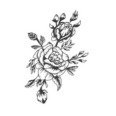 highly detailed hand drawwn roses flower, vector