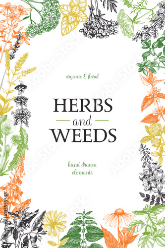 Here Are Some Easy To Grow Medicinal Plants And Uses Herbal