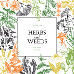 Vector design with hand drawn weeds and herbs. Decorative background with vintage medicinal and aromatic plants sketch.