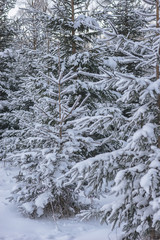 winter landscape with tree covered with snow, winter photography