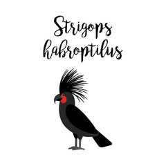Exotic tropical bird isolated on white background. Strigops habroptilus parrot bird vector element with hand drawn inscription