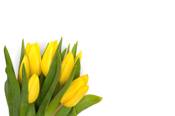 Yellow tulips on a white background.