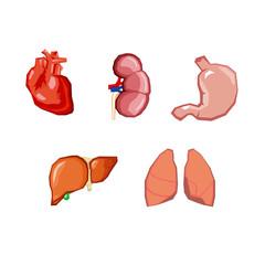 Human organs. Internal organs set. Human anatomy, internal parts of the body.