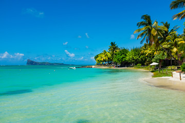 Fond de hotte en verre imprimé Tropical plage tropical beach with coconut palms on the background of the islan