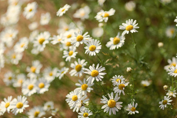natural summer background, blurred image, selective focus, shallow depth of field