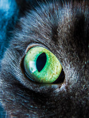 A yellow to green degraded cat eye taken with a natural light source.