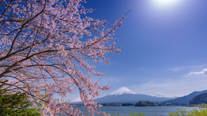 Fotomurales - Sakura blossom, Fuji san view from Kawaguchiko lake, Japan