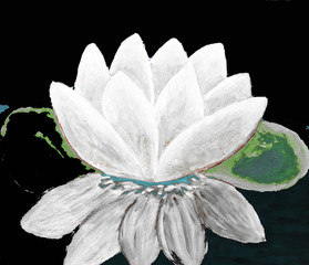 White waterlily on black