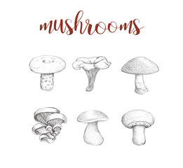 Mushroom set. Collection of mushrooms vector illustration