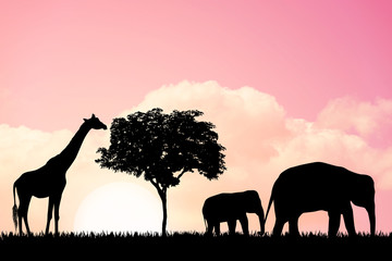 Nature background with elephants and giraffe