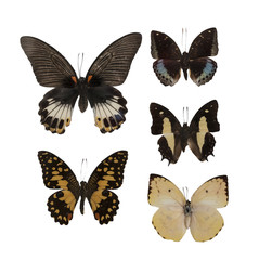 Realistic butterflies photography set  cropped and isolated on white background: Great Mormon (Papilio memnon), Lime Butterfly, Archduke (lexiasdirtea), Common Nawab, Lemon Emigrant.