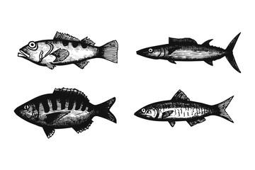 marine fish set