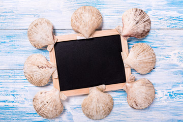 Tropical chalkboard with seashells on blue wooden background