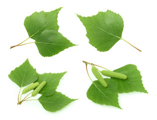Birch leaves isolated. set