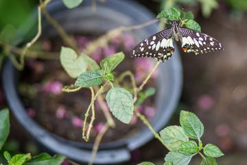 Farfalla e pianta