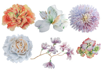 Set with flowers. Rose. Peony. Alstroemeria. Marigold. Watercolor illustration.