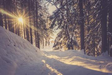 Winterlicher Wald in der Abendsonne