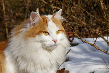 A cat in winter.