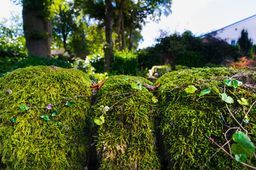 Moss On The Garden Wall