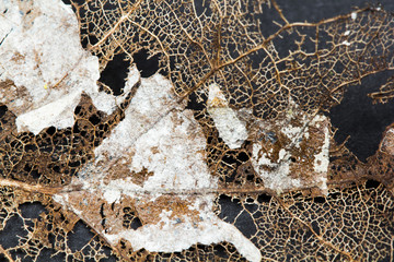 Texture with rotten leaves with fibers - filigree abstract