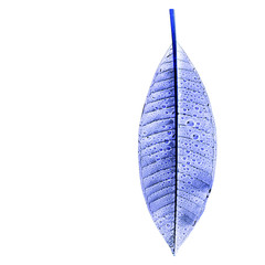 xray effect image of a leaf with water drop on white background