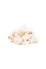 Raw white mushrooms, isolated on white