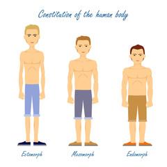 Human Body. Ectomorph. Mesomorph. Endomorph.