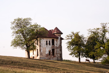 Ruined house with tree next to it in the field