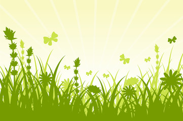Spring Background with Green Grass.