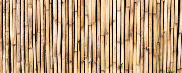 Fundo com cerca de bambu.