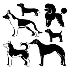 Cute dogs.