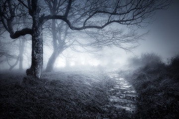 path in dark and scary forest Wall mural