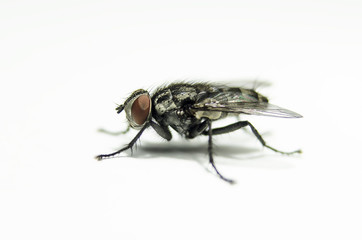 Macro view of nature fly machine on white background