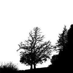 Realistic tree silhouette (Vector illustration).